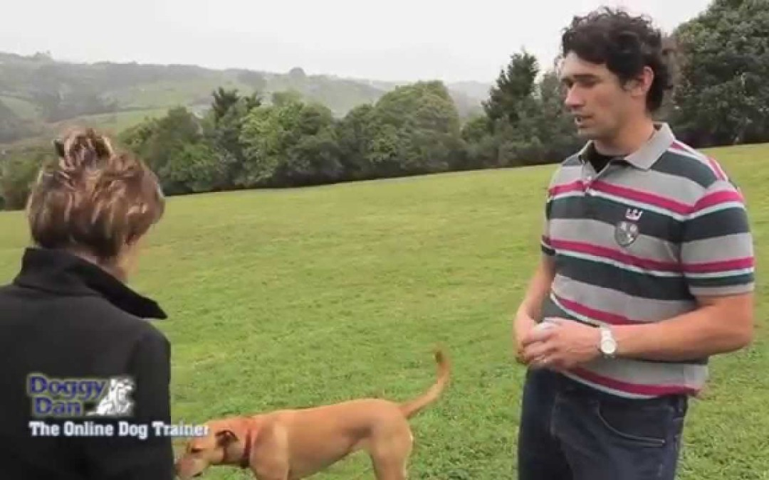 Doggy Dan's Dog Training Philosophy