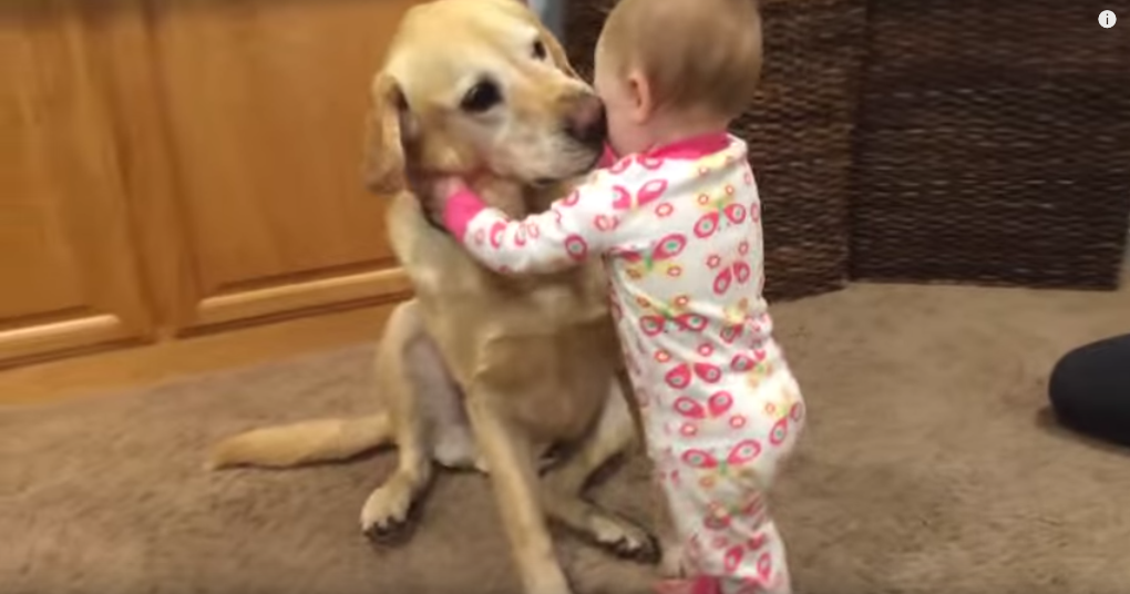 Compilation of Family Dogs Interacting With Babies