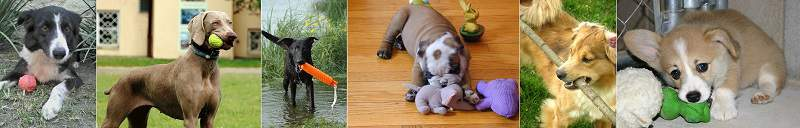 Some examples of chew toys that you can use to redirect your puppy's mouthing onto. Different dogs have different tastes in toys they like to chew, so you may need to try a few before you find the right one.