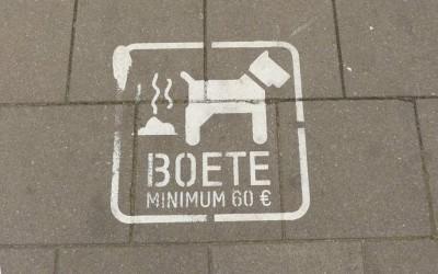 Toilet Training Dogs