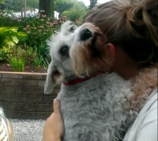 Reunited Dog Faints From Overwhelming Joy