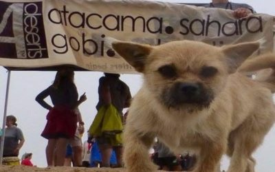 Tiny Stray Dog Follows Runner Over 125km of Desert