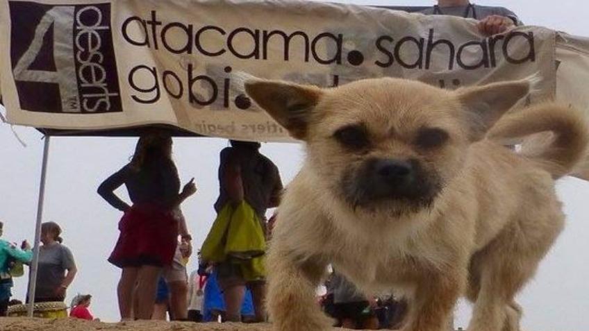 Tiny Stray Dog Follows Runner Over 125km of Desert