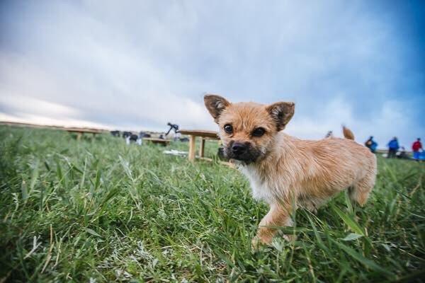 gobi-dog-2